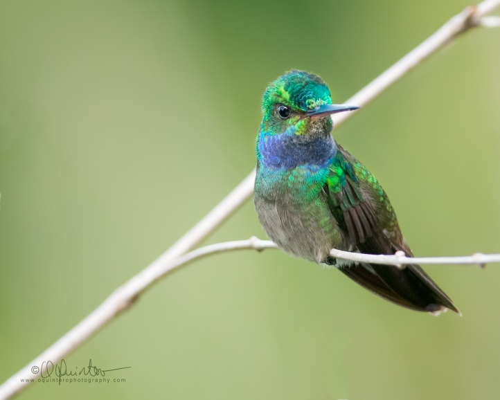 charming-hummingbird-paraiso1